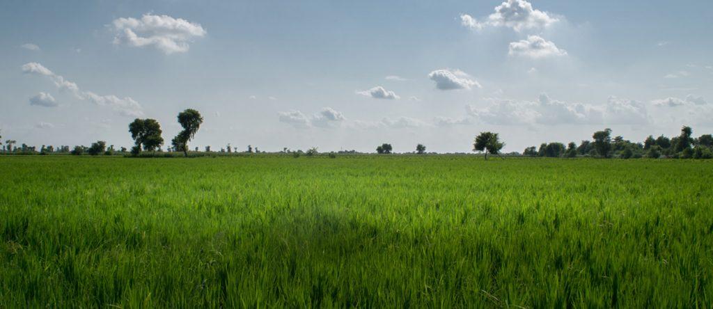 Fields near Al Raheem City, Okara Punjab, Pakistan
