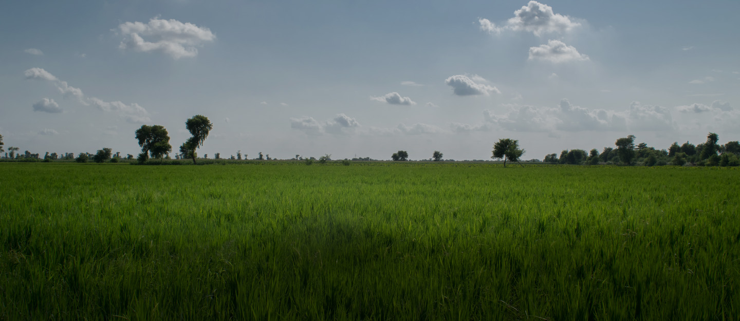 There are several green fields in Jeewan City Housing Scheme, Sahiwal.