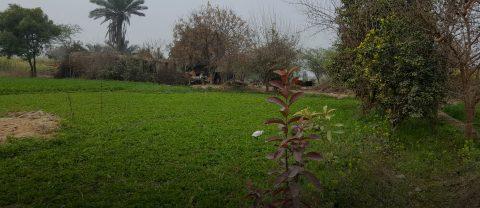 Ismail Green, Faisalabad